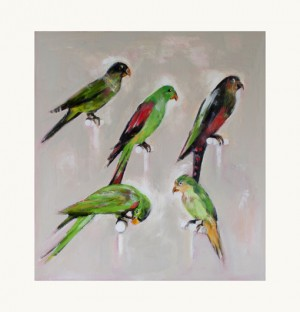 Collection of Parrots