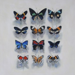 Collection of Butterflies 1